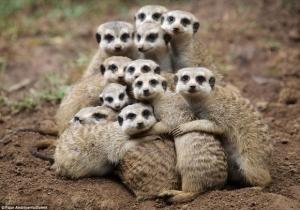 hug_friend_day_38_cute_large_msg_136699835332